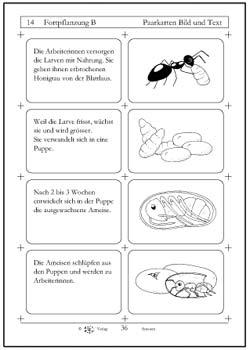 Ameisen 2./3. Klasse | Chinderbuechlade - fürs Leben gern lesen